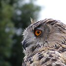 Eagle Owl by wahboasti