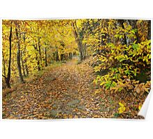 Autumn path in Provence forest Poster