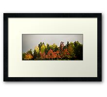 urban forest Framed Print