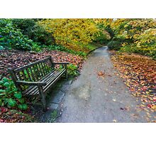 Fall Walks Photographic Print