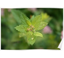 Dew drops on the leave Poster