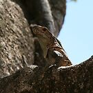 Lizard in a Tree by Stephanie  Wiese
