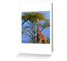 Giraffe and Weaver Tree Greeting Card