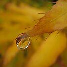 Autumn Rain by Dawn Ostendorf