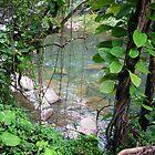 Rainforest by noffi