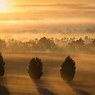 Misty Tree Sunrise by Matt Simner