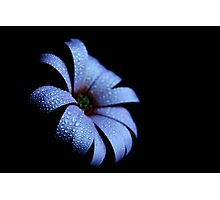 Baby Blue in the Dark Photographic Print