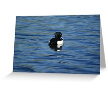 Black And White Male Tufted duck   Greeting Card