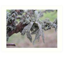 Lichen. Art Print