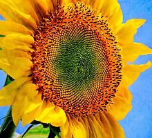 Sunflower Sunshine by Christina Rollo