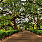 Louisiana Plantation by Kate Adams