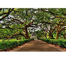 Louisiana Plantation Photographic Print
