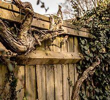 Wooden Scene by dawesy7