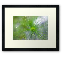 Spikelets of Flowers Framed Print