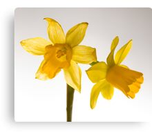 Daffodil Haiku Canvas Print