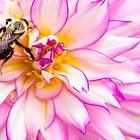Beautiful Bee & Dahlia by daphsam