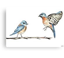 Bluebirds watercolour and ink Canvas Print