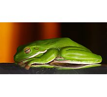 Frog dreams Photographic Print
