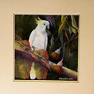 Midnight Watch    Sulphur Crested Cockatoo by Sandra  Sengstock-Miller