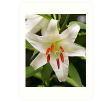 Closeup of a Lovely Easter Lily Art Print
