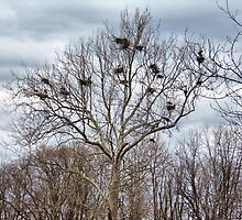 Heron Tree by Monnie Ryan