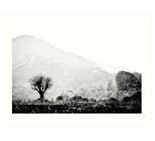 Lone Tree, Malawi Art Print