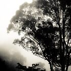 Through the Fog, Zomba, Malawi by Tim Cowley