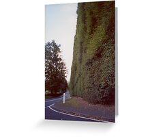 Meikleour Beech Hedge, Perthshire, Scotland Greeting Card