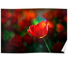 Red tulip - Mystery of blooming Poster
