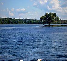 Geese enjoying a day at the Lake by Susan S. Kline