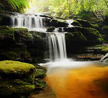 Leura Cascades, New South Wales. by Andy Newman