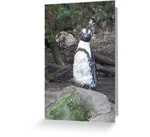 Posing Penguin on the Rocks Greeting Card