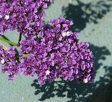 Purple Beauty by PhotosbyNan