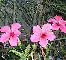 pink flowers by angela-lee
