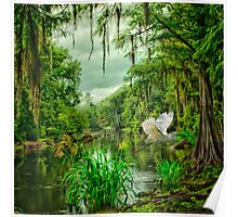 Withlacoochee River Dreaming Poster