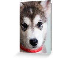 I'm so cute! Greeting Card