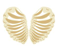 Heart Shaped Rib Cage Photographic Print