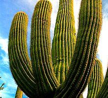 Saguaro Cactus by Jeff Blanchard