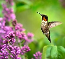 Hummingbirds Welcome by Christina Rollo
