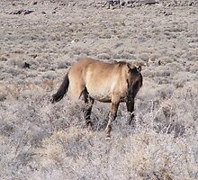 wild horse in a desolate desert by Elizabeth Stevens