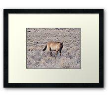 wild horse in a desolate desert Framed Print