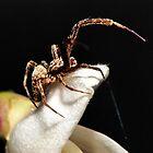Mr.Spider by Katie Clark