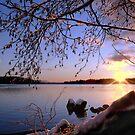 Taku Dawn by VickiOBrien