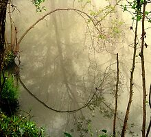 Reflections In The Fog by DottieDees
