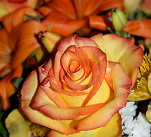The Rose by katymanrique