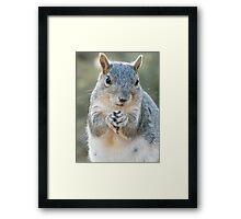 Momma Squirrel Framed Print