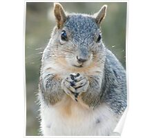 Momma Squirrel Poster