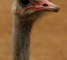 what you looking at by shaun pearce