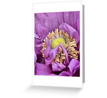 Poppy central Greeting Card