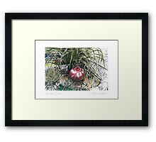 A Potter's Garden (No.8) Framed Print